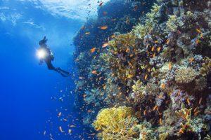 Tauchkurs am Wochenende - Open Water Diver (letzter WE OWD Kurs 2019) @ Tauchturm Seiersberg