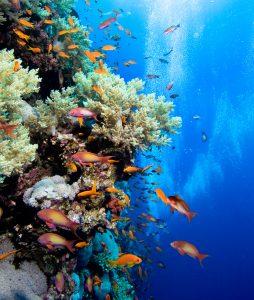 Start Tauchkurs am Abend - Open Water Diver @ Tauchturm Seiersberg