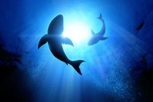 Spezialkurs Shark Ecology - Auch als Webinar buchbar (-15% Rabatt in der Tauchturm App) @ Tauchturm Seiersberg