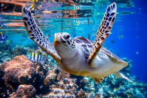 Spezialkurs Science of Diving @ Tauchturm Seiersberg